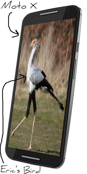 Eric's Moto X and Bird Pixlr