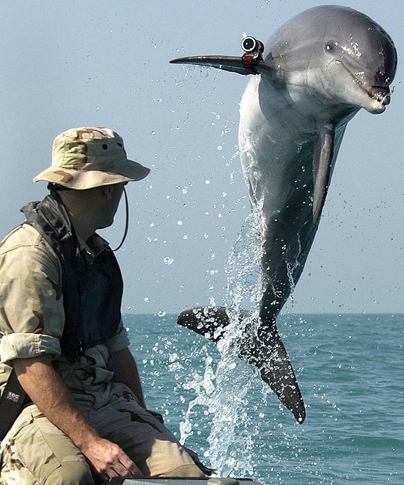 Hacked dolphin