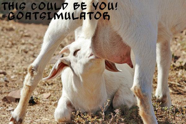 Hipster Goat Milk